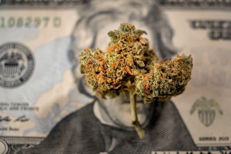 Cannabis Marketing Consultant